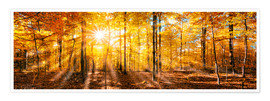 Premium poster Autumnal forest panorama in sunlight