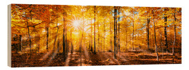 Wood  Autumnal forest panorama in sunlight - Jan Christopher Becke