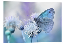 Acrylic glass  Butterfly blue - Atteloi