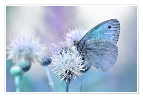 Premium poster Butterfly blue