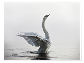 Premium poster  Swan on lake - Alex Saberi