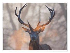 Poster Stag breath at sunrise, Richmond park