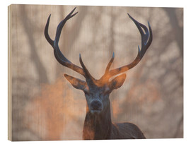 Wood print  Stag breath at sunrise, Richmond park - Alex Saberi