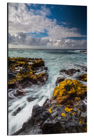 Alu-Dibond  Yellow Seaweed at the Coast of Big Island, Hawaii - Markus Ulrich
