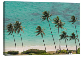 Canvas print  Palm Trees in front of the turquoise Ocean - Markus Ulrich