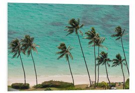 Forex  Palm Trees in front of the turquoise Ocean - Markus Ulrich