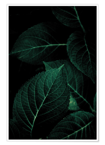 Premium poster Dark Leaves 1
