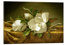 Acrylic print  Magnolias on Gold Velvet Cloth - Martin Johnson Heade