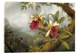 Acrylic print  orchids and hummingbird - Martin Johnson Heade