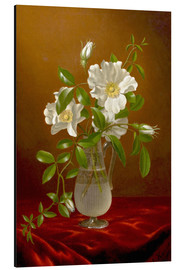 Aluminium print  Cherokee Roses in a Glass Vase - Martin Johnson Heade