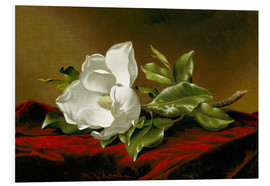 Foam board print  Magnolia Grandiflora - Martin Johnson Heade