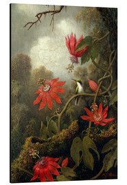 Aluminium print  Hummingbird and Passionflowers - Martin Johnson Heade