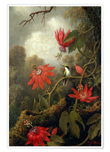 Premium poster Hummingbird and Passionflowers