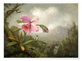 Premium poster Orchid and Hummingbird