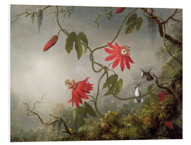 Foam board print  Hummingbird on a Passionflower - Martin Johnson Heade
