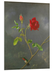 Forex  Hummingbird on a rose - Martin Johnson Heade