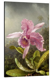 Aluminium print  Hummingbird and orchid (detail) - Martin Johnson Heade