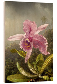 Wood print  Hummingbird and orchid (detail) - Martin Johnson Heade