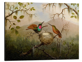 Aluminium print  Two hummingbirds at their nest - Martin Johnson Heade