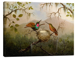 Canvas print  Two hummingbirds at their nest - Martin Johnson Heade