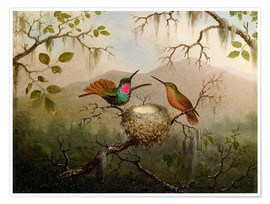 Poster  Two hummingbirds at their nest - Martin Johnson Heade
