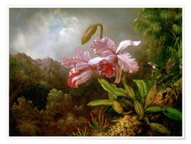 Premium poster  Orchids in a Jungle - Martin Johnson Heade