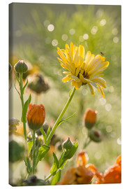 Canvas print  Yellow and orange flowers in the morning - Edith Albuschat