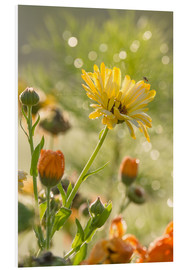Forex  Yellow and orange flowers in the morning - Edith Albuschat