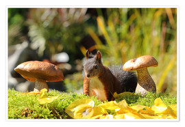 Poster  Sweet squirrel on fodder search - Uwe Fuchs