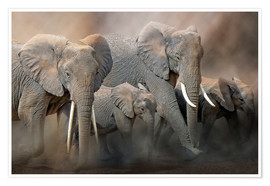 Premium poster A group of elephants