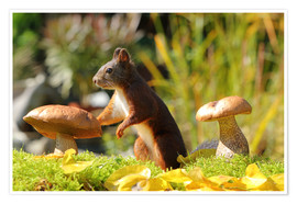 Premium poster  Squirrel on fodder search - Uwe Fuchs