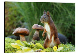 Aluminium print  Squirrel on fodder search - Uwe Fuchs