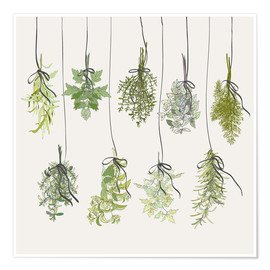 Premium poster Herb bouquets