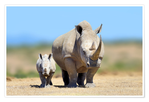 Premium poster White rhinoceros with young in Kenya, Africa