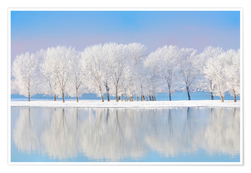 Premium poster Frost-covered oaks