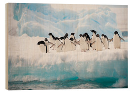 Wood print  Adelie penguins on ice