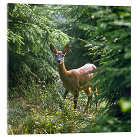Acrylic print  The deer in the forest - Reinhard Siegel