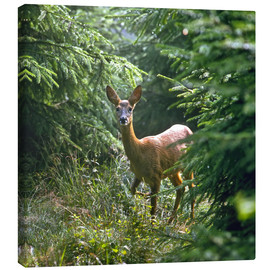 Canvas print  The deer in the forest - Reinhard Siegel