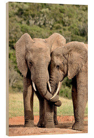 Wood  cuddling elephants - imageBROKER