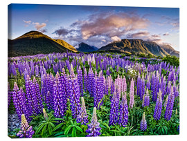 Canvas print  Lupines at Arthur's Pas - imageBROKER