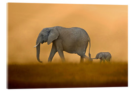 Acrylic print  In the protection of the mother - FLPA