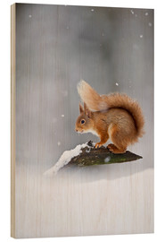FLPA - Eurasian Red Squirrel standing on branch in snow
