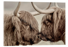 Acrylic print  Two Scottish Highland Cattle - imageBROKER
