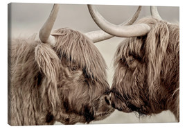 Canvas print  Two Scottish Highland Cattle - imageBROKER