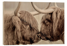 Wood print  Two Scottish highland cattle - imageBROKER