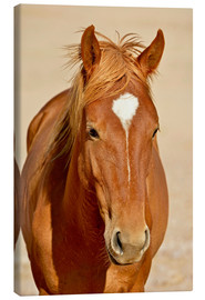 Canvas print  faithful look of a brown mare - imageBROKER