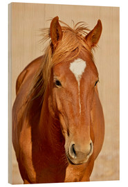 Wood  faithful look of a brown mare - imageBROKER