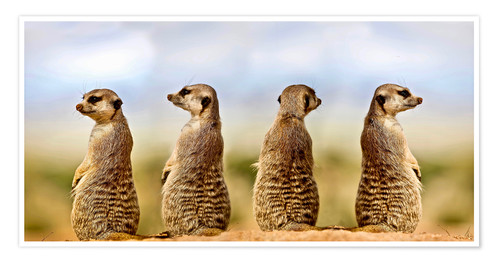 Premium poster Four meerkats - four thoughts