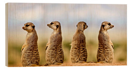 Wood print  Four meerkats - four thoughts - Gérard Lacz
