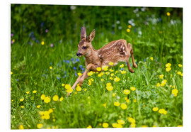 Forex  Roe Deer fawn running in flower meadow, Normandy - Gérard Lacz